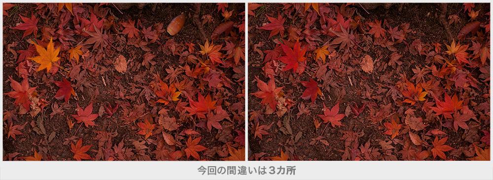 秋の間違い探し画像16