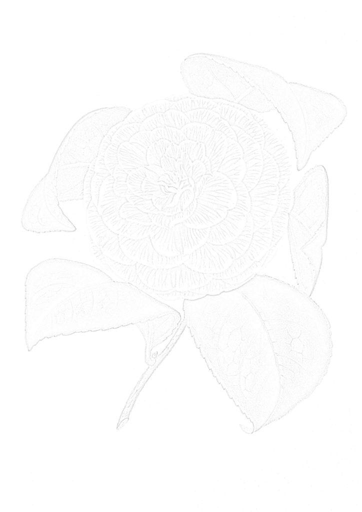 大人の描き塗り絵03_無料プリント
