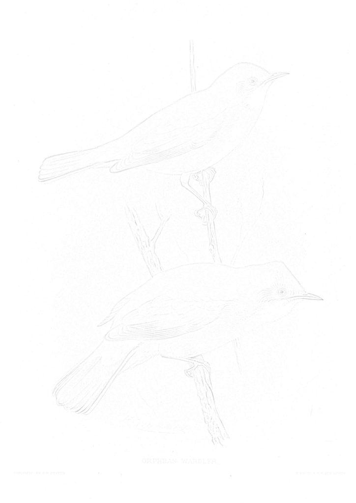大人の描き塗り絵04_無料プリント